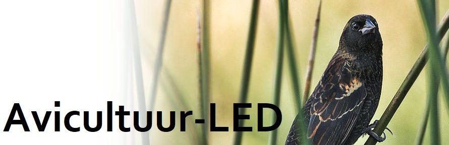 Avicultuur-LED | Broedkooi verlichting